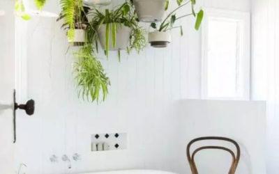 Des plantes vertes dans une salle de bain ?
